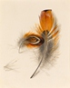 Study of two Feathers -