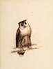 Study of an Eagle Owl -