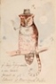 `Ye Owly Pusseycatte, a new Beast found in ye Island of New South Wales' -