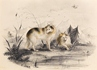 Two Wolves in a Mountainous Landscape -