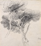 Study of Umbrella Pines, Italy -