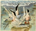 Roseate Terns displaying on a beach -