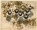 Seven Lapwings -