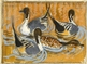 Courting Pintails -